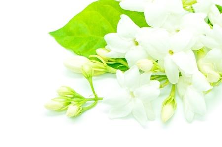 흰색 재스민 꽃, 흰색 배경에 고립