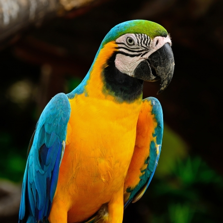 Blue and Gold Macaw aviary