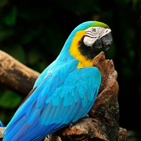 aviary: Blue and Gold Macaw aviary
