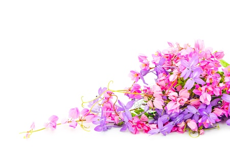 Summer flowers background, beautiful pink and purple flower, isolated on a white background
