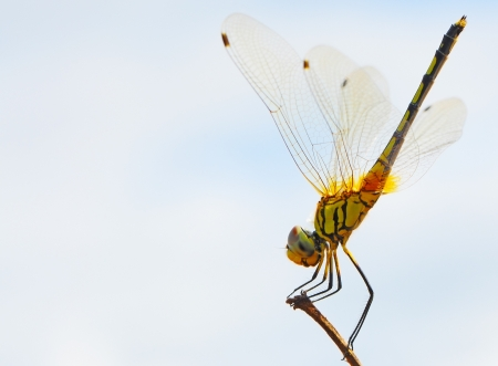 Dragon fly on a branch photo