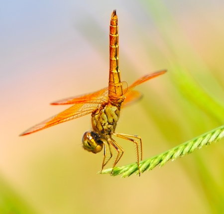 Beautiful dragonfly on a branch with nature background photo