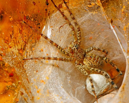 Closeup of spider and her eggs in a hole