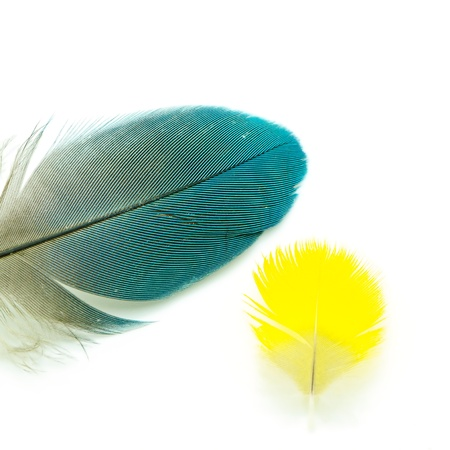 Blue and yellow feather isolated on white photo
