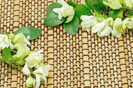 jessamine: Fiore bianco, Orang Jessamine (Murraya paniculata) o in Cina Box Tree, Andaman Satinwood, decorate bamb� pasketwork sfondo