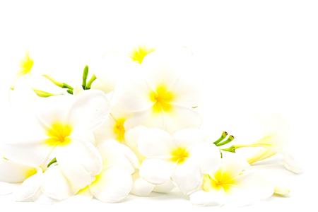 Weiße Und Gelbe Duftende Blume, Plumeria Oder Frangipani, Auf Einem ...
