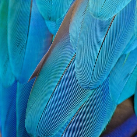Pattern of Blue and Gold Macaw feathers Stock Photo