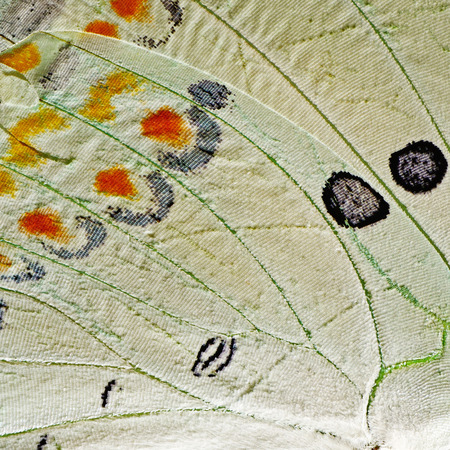 Macro closeup of butterfly wing