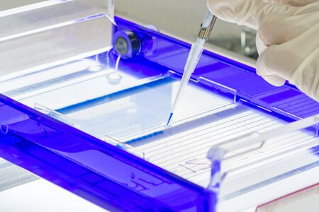 electrophoresis: Scientist loading a sample into a gel for electrophoresis