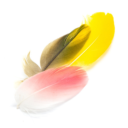 feather: Colorful bird feathers isolated on white background