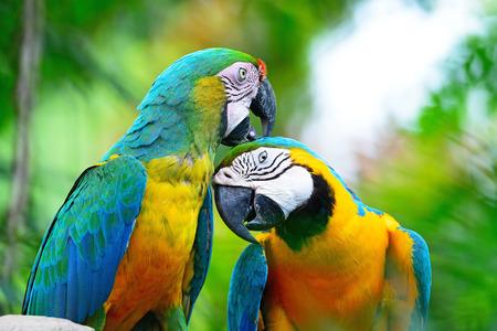 loro: Colorido loro pájaro perfil retrato guacamayo arlequín