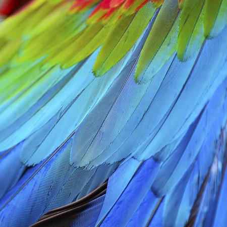 Belle texture de fond la nature de Greenwinged ara plumes motif Banque d'images - 40917784