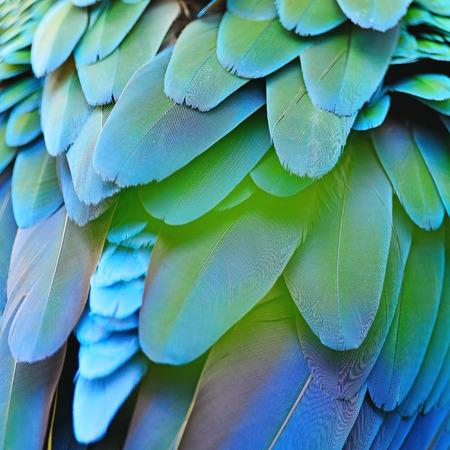 arlecchino: Verde uccello piumaggio, Arlecchino Ara piume, la natura texture di sfondo
