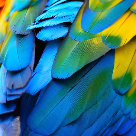 pluma: Textura hermosa naturaleza de fondo de patr�n de plumas escarlata Macaw
