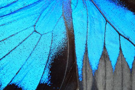 블루 나비 날개, 자연 패턴 질감 배경