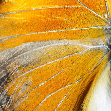 derived: Nature texture, derived from orange butterfly wing background Stock Photo