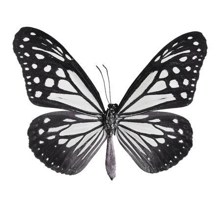 mimo: Negro mariposa, Tawny Mime mariposa en el perfil de color de fantasía, aislado sobre fondo blanco