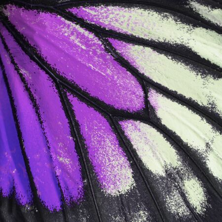 derived: Nature texture, derived from purple butterfly wing background