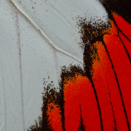 derived: Nature texture, derived from red butterfly wing background