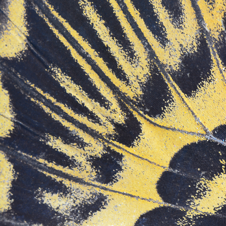 derived: Nature texture, derived from yellow butterfly wing background Stock Photo