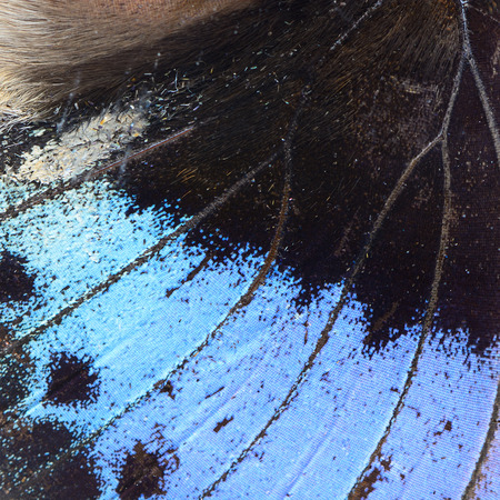derived: Nature texture, derived from blue butterfly wing background Stock Photo