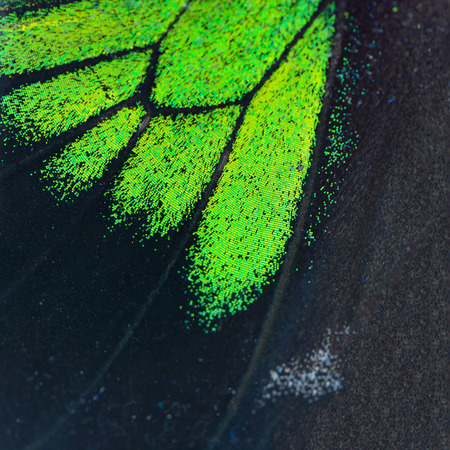 derived: Nature texture, derived from green and black butterfly wing background Stock Photo