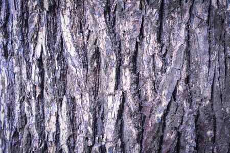aging skin: Old Wood Tree Texture Background Pattern Stock Photo