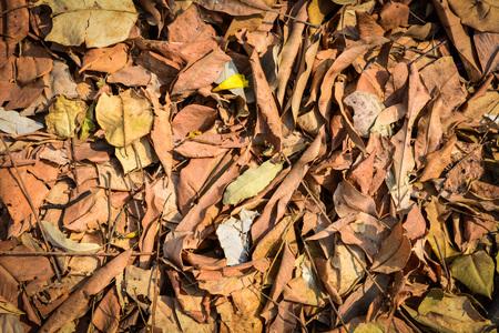 Dry leaves background Stock fotó