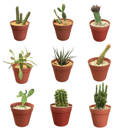 Cactus collection isolated on white background Stok Fotoğraf
