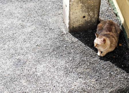 shady: A cat shady place on the street