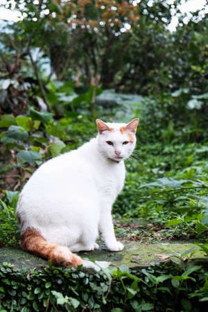 A cute cat in the garden, white cat
