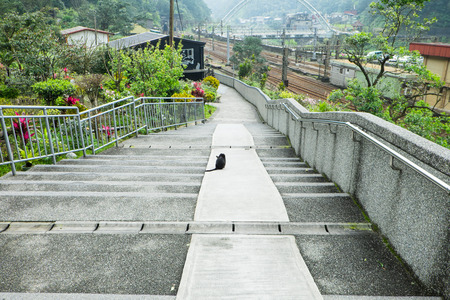 A cat sit on stairs in beautiful town