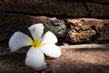 sear: The sear plumeria fall on brick in Ruins. Stock Photo