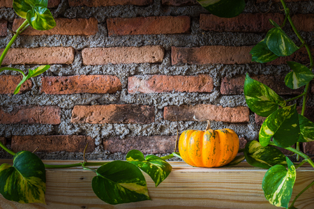 Close up small orang pumpkin with Ivy-Arum leaf. photo