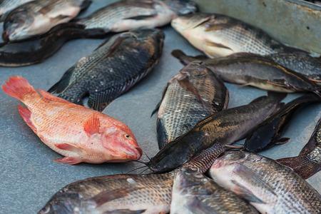 nile tilapia: Alcuni mercato. Long diverse ore pesci morti alla vendita a prezzo low-cost. No fresco ma stil gustoso. Pesci in immagine viene Walking pesce gatto e tilapia del Nilo.