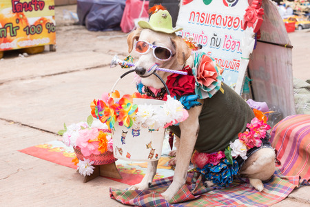 loei: Thailand June 27: Dog clothing fancy show on wayside to donate  on june 27 ,2015 in loei province of thailand.