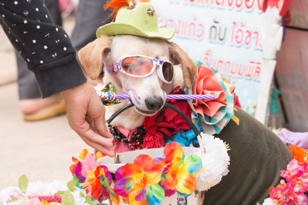 piteous: Thailand June 27: Dog clothing fancy show on wayside to donate  on june 27 ,2015 in loei province of thailand.
