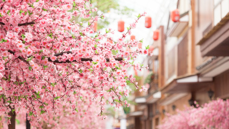 beautiful pink cherry blossom Sakura flower, and with vintage japan building background.