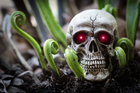 close up eyes: Close up skull human and red eyes shining light with new born fern. Stock Photo