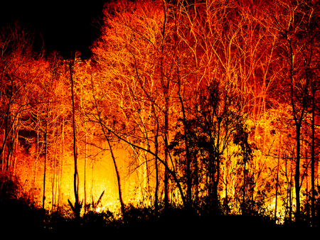 Fire Burning tree at Night. Stock fotó
