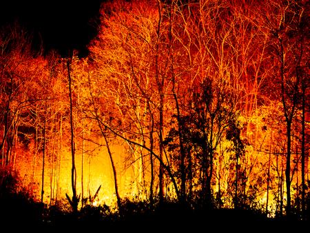 burning bush: Fire Burning tree at Night. Stock Photo