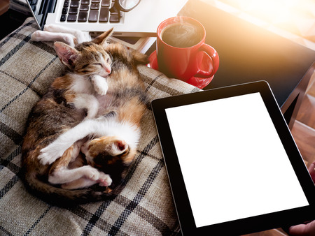 Soft image sleeping baby cats  and red cup coffee with  laptop and  tablet on black table.