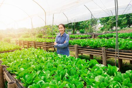 Working asian women concede and be smile in organic  Vegetable growing farm. Stock Photo