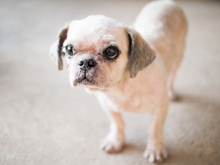 unbeautiful: Old and ugly dog has beautiful bite the bread.