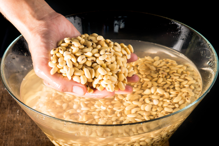 Soybean or Glycine max in hand and soak in water 3 hour be for make soy milk. Stock Photo