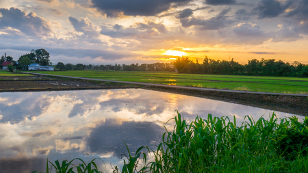 pyre: Sun rise with water reflection clouds in the young rice field and the road to Funeral pyre.