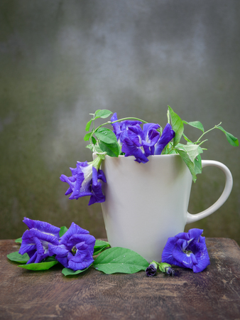 Still life fresh Blue pea or butterfly pea herb in the coffee cup on wood with grunge wall background. 版權商用圖片