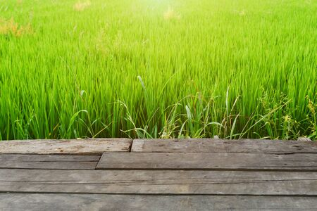 Wooden board table front  rice field sunlight. 版權商用圖片