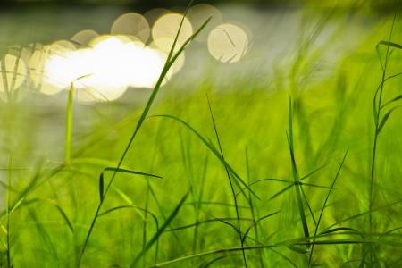 川の横にある公共の公園で新鮮な緑の芝生