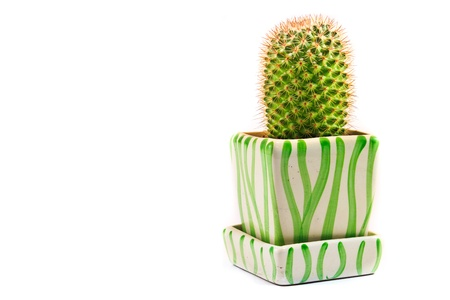 A green cactus on the basin isolated on white background  photo